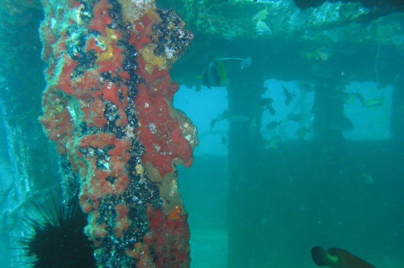 Onderwater_P9210500 Wrak_b